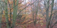 Autumn_colour_2013_web.JPG